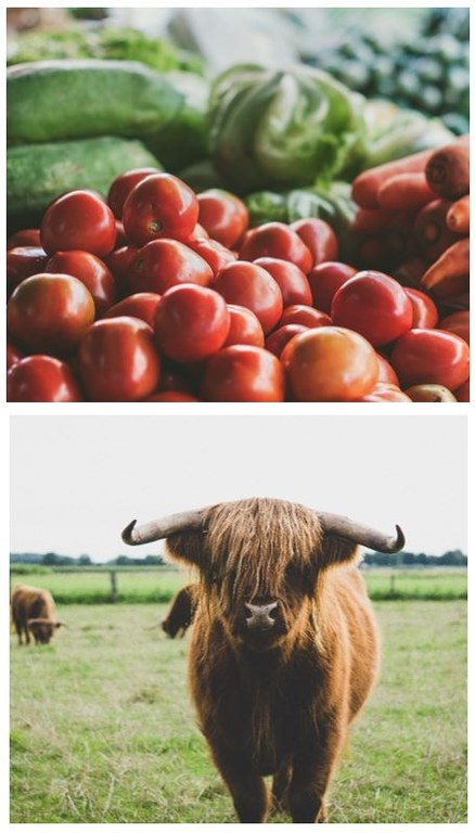 AgriBisnes III - utveckla ditt affärskunnande kuvapysty2
